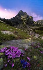 Pirin mountain/Bulgaria (ilian_bozhanov) Tags: pirin пирин landscape flower peak mountaine mountains sky sunlight nature beautiful bulgaria