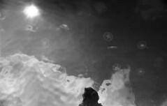It's Just Us (Aurelia aurita) (Arne Kuilman) Tags: nikon fm3a kentmere iso400 kentmere400 developed rodinal rodinalspezial standdevelopment 135 35mm analogue film scan 1200dpi epson aureliaaurita oorkwal kwal jellyfish water reflection clouds