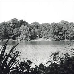 Landschaftspark, Machern (reinirazzi) Tags: reinirazzi weltax tessar fomapan100 rodinal150 machern park 6x6 mittelformat
