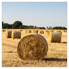 _°°o°° (fot_oKraM) Tags: acker feld field ackerbau landwirtschaft agriculture stadtlohn nrw wendfeld ernte erntezeit harvest