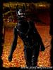 Joy of Sunfire - Set 12 Warrior - 1100032 25p (joyofsunfire) Tags: ponyplay petplay petgirl humanpony joyofsunfire joy sunfire set12 warrior beckedorf sword swords katana ninja latexhooves latexmask latex latexmodel fetish fetishmodel lycra spandex skintight catsuit ponyboots hoofboots ponygirl