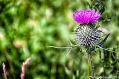 20170724-_MG_9544-Edit (Pictures by Walter) Tags: 07jul canoneos500d linlithgow linlithgowloch picturesbywalter scotland walterhampson westlothian walterhampsonhotmailcom unitedkingdom gb