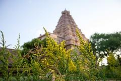 Brihadeeswarar Temple, Gangai konda cholapuram (Premnath Thirumalaisamy) Tags: gangaikondacholapuram chola visitingcholas cholajourney kalki ponniyinselvan rajendracholan thanjavur temple brihadeeswarartemple southindia tamilnadu premnaththirumalaisamy travel travelphotography travelogue gangaikondan