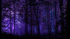 Magic Forest (rubalanceman) Tags: forest mystery magic moscow russia summer москва россия лето лес магия мистика