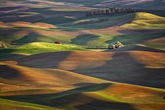 Afternoon in the Palouse (Alan Amati) Tags: amati alanamati america american usa us wa washington pacificnorthwest nw northwest palouse thepalouse field fields farm farms wheat afternoon sunset light late lateafternoon hills rolling terrain rural country barn steptoe butte steptoebutte colfax shaddow shaddows topography spring landscape tipf25