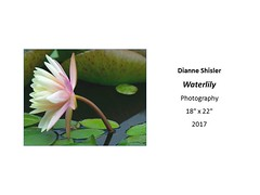 "Waterlily • <a style=""font-size:0.8em;"" href=""https://www.flickr.com/photos/124378531@N04/35618591230/"" target=""_blank"">View on Flickr</a>"