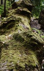 MossyStump (Shoot North) Tags: moss