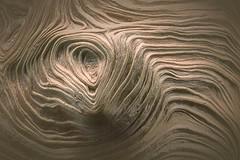 wood grain (blasjaz) Tags: macromondays holz maserung holzmaserung baumperle maserknolle burl blasjaz texture macro makro abstract abstrakt burr