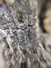 Bark up close (earthdog) Tags: 2017 lgenexus5x lge nexus 5x androidapp moblog cameraphone cliponlens macro 20x macro20x bark tree texture losgatoscreektrail