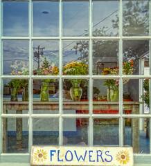 Flower shop (mgstanton) Tags: mv17 marthasvineyard summer vacation flowers reflection flowershop window signs beetlebungfarm