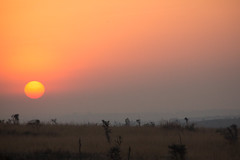 Sunrise at Murchison (Ring a Ding Ding) Tags: africa murchisonfallsnationalpark orange uganda sunrise nwoya northernregion coth ngc npc