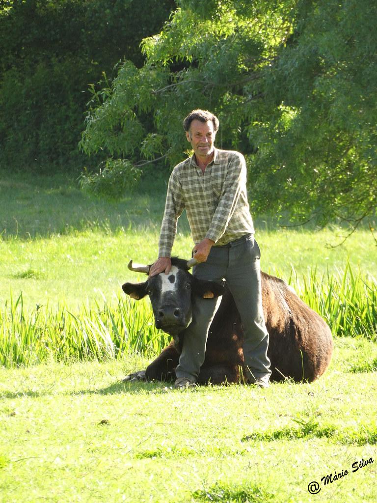 Águas Frias (Chaves) - ... o Venâncio e o touro ...