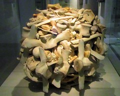 Stacked whalebone (scrappy annie) Tags: nationalmuseumofscotland andygoldsworthy