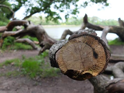 Ballyannan Woods