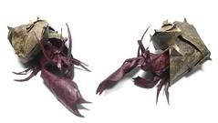 Hermit Crab - Satoshi Kamiya (Mariano Zavala B) Tags: hermit crab satoshi kamiya cangrejo ermitaño