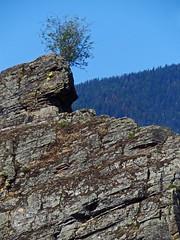 over Thompson Falls...Montana (al-ien) Tags: montana nature landscape lonetree mountains