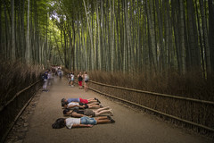 30/52 & FDT-118 Prime focus of the Arashiyama bamboo forest (- Cajón de sastre -) Tags: week302017 52weeksthe2017edition weekstartingsundayjuly232017 week30theme facedowntuesdaygroup facedowntuesday i♥facedowntuesday fdtforlife fdt creativephotography creativeselfportrait lío20 objetivoverano japón japan bosque forest bamboo bambú kyoto arashiyama arashiyamabambooforest prime