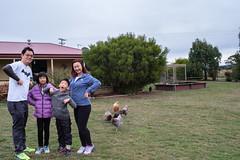Blending in with the chooks (Stinkee Beek) Tags: heatherbellcottage leonard erin yewyen tasmania hobart australia ethan