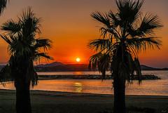 Feelings (Karol ...) Tags: sunrise dawn coloursofsunrise palmtrees sea reflections sun riddles gold riviera anewday anewlife