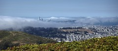 Engulfed in fog (PeterThoeny) Tags: sanfrancisco california sanfranciscobay sanfranciscobayarea sanbrunomountain sanbrunomountainstatepark park statepark downtown fog mountain sony sonya7 a7 a7ii a7mii alpha7mii ilce7m2 fullframe fe2870mmf3556oss 3xp raw photomatix hdr qualityhdr qualityhdrphotography fav100 panorama