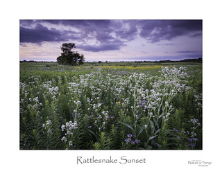 Rattlesnake Sunset