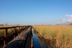 DSC_4354 (1) (quercus cerris) Tags: passerella oasi oasidimassaciuccoli italia italy toscana