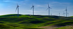 Windmills (PJ Resnick) Tags: 56mm fujinon56mmf12 56mmf12 pjresnick palousewa perryjresnick pjresnickgmailcom pjresnickphotographygmailcom ©2017pjresnick ©pjresnick nature light fuji fujifilm atmosphere atmospheric digital shadow texture shadows yellow angle perspective white xf fujinon resnick outdoor green brown orange rectangle rectangular color colour sky clouds blue xpro2 fujifilmxpro2 grass drama windmill field windmills jettrail evening sunset sundown