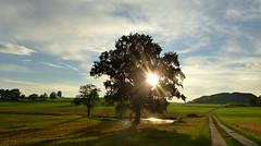 Mal was Sonniges für die trüben Tage :-) (isajachevalier) Tags: sonne sonnenuntergang landschaft licht baum abend abendstimmung sachsen panasonicdmcfz150