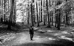Which path will you choose? (mdmujjammilehaamem) Tags: schleswigholstein deutschland kiel tannenberg tiergehege pathway monochromephotography monochrome summer trees sanctuary wildlife woods