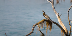 Birding On Lake Kariba 4 (Alec Lux) Tags: kariba animal bird birding birds lake lakekariba landscape landscapephotography nature naturephotography wildlife wildlifephotography mashonalandwestprovince zambia zw