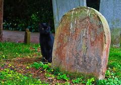 Black cat at St Nicholas, Ringwould (joshtilley) Tags: blackcat blackcatphotography catphotography catinchurchyard stjohnskingsdown stjohns saintjohns stjohntheevangelist saintjohntheevangelist stjohnschurchyard stjohnskingsdownchurchyard stjohnschurchkingsdown kingsdown kent eastkent uk unitedkingdom catincemetery churchyardcat ukchurchyard englishchurchyard britishchurchyard gravestone smallgravestone domedgravestone tombstone headstone