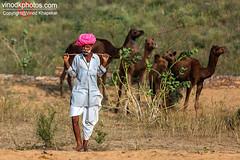 Pushkar- Pose of Shepherd. (Vinod Khapekar) Tags: india pushkar camel fair portrait man desart pose villager shepherd canon5dmarkii canon rajasthan vinodkhapekar