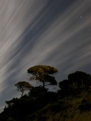 Pino piñonero (toninhodacantina) Tags: árbol tree noche fotografíanocturna longexposure largaexposición mazagón andalucía landscape paisaje españa spain sky cielo nubes clouds verano summer microfourthirds olympusomdem1 panasoniclumixgvario1235f28 m43