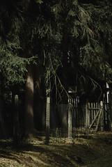 17.7.17_Jevany-5836 (Churechawa) Tags: williameggleston vintage urban unhappy trendy topography themed stylish style striking story stilllife stephenshore sorrowfull sad retro replichrome remarkable prague postmodern polaroid polacek poetry poetic photo original old newtopography neotopography mystery mysterious josefsudek jevany itf instituteofcreativephotography instituttvůrčífotografie influence improvisation idea churechawa graphic fujifilms5pro forest film feeling emotion detail decay decadent curious crossprocess creative countryside conceptual color atmosphere artistic art analog agfahdc200 czechrepublic