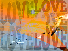 The World Can Never Have Enough Love (soniaadammurray - Off) Tags: digitalphotography manipulated experimental collage abstract love global birds sky text orange blue fly water nature story workingtowardsabetterworld 2017