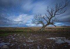 A Westerly Lean.. (CamraMan.) Tags: tree weather leaning westerly east field canon6d canon1740mmlusm longexposure bewcastlefells bewcastle cumbria ©davidliddle ©camraman