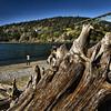 Driftwood (msuner48) Tags: d600 acr5 cs4 wood driftwood beach deceptionpass washington bridge hills trees water people topazlabs nikcollection nikon1635mmf4