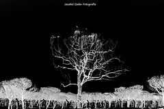 Matalscañas quemada 2 (Jezabel Galán) Tags: naturaleza paraje natural doñana maneli huelva matalascañas arrasado fire fuego shadow sombras negativo