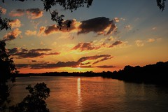 Shadows  in Gold (Images by Jeff - from the sea) Tags: sunset bluesky bundaberg goldensunset goldenhour clouds water burnettriver gumtrees mangrovetree reflections dusk twilight nikon d7200 tamronsp2470mmf28divcusd queensland australia topf25 1500v60f