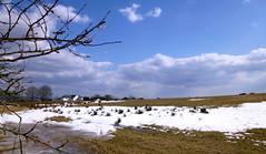 Snowy Billinge (pip glover) Tags: snow farm billinge sunny winter