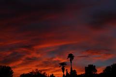 Sunset July 26 2017 #51 (Az Skies Photography) Tags: sun set sunset dusk twilight nightfall cloud clouds sky skyline skyscape skycandy skyfire red orange yellow gold golden salmon black canon eos 80d canoneos80d eos80d rio rico arizona az riorico rioricoaz arizonasky arizonaskyline arizonaskyscape arizonaskycandy arizonaskyfire july 26 2017 july262017 72617 7262017