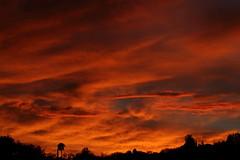 Sunset July 26 2017 #31 (Az Skies Photography) Tags: sun set sunset dusk twilight nightfall cloud clouds sky skyline skyscape skycandy skyfire red orange yellow gold golden salmon black canon eos 80d canoneos80d eos80d rio rico arizona az riorico rioricoaz arizonasky arizonaskyline arizonaskyscape arizonaskycandy arizonaskyfire july 26 2017 july262017 72617 7262017