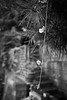 Dangling Vine - Walk to bus stop in Totsuka JRC 20170628 (Rick Cogley) Tags: 2017 cogley fujifilmxpro2 23mm 1500sec iso800 expcomp03 whitebalanceauto noflash programmodemanual camerasnffdt23469342593530393431170215701010119db2 firmwaredigitalcameraxpro2ver310 am wednesday june rainy tsuyu summer rainyseason f28 apexev120 focusmodemanual lenstypexf23mmf2rwr yokohama totsuka kanagawa japan jp