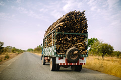 Firewood (CIFOR) Tags: wood ouagadougou productionforests truck cifor biofuels finance road tree bioenergy investments africa firewood fuelwood woods horizontal burkinafaso climatechange