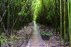 Bamboo Forest (RaulCano82) Tags: bamboo trail pipiwai forest hawaii hi usa tropical vacation travel adventure hike hiking pipiwaitrail pipiwaifalls raulcano canon 80d dslr centered symmetry path wood greenery jungle rainforest landscape scenery nature earth
