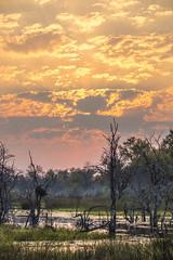 Botswana Sunset (matttrevillionphotography.com) Tags: linyanti africa botswana sunset