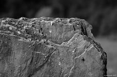 schiste - ardoise (Patrice Dx) Tags: roche schiste minéral ardoise