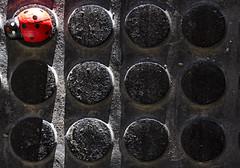 TEXTURE N. 1 (FRANCO600D) Tags: macro texture black coccinella red rosso canon eos600d franco600d gomma antiscivolo ladybug