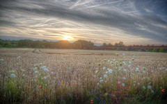 Nature reloaded (blavandmaster) Tags: weat deutschland himmel clouds ciel duitsland countryside landschaft minden sommer nrw sonnenuntergang summer incredible badoeynhausen hemel wolken korn christiankortum canon 2017 landscape tyskland coucherdesoleil happy colours mighty allemagne portawestfalica fields sunset germany kaiserwilhelmdenkmal hill interesting july harmonic kaiser light wilhelm complete eos6d ostwestfalen juli kleuren perfect westfalen zomer nuages zonsondergang sky weizen