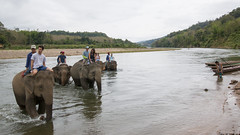 Almost there (HansPermana) Tags: luangprabang laos holiday relax elephantvillage elephants crossing river namkhan water wet adventure tourists activity